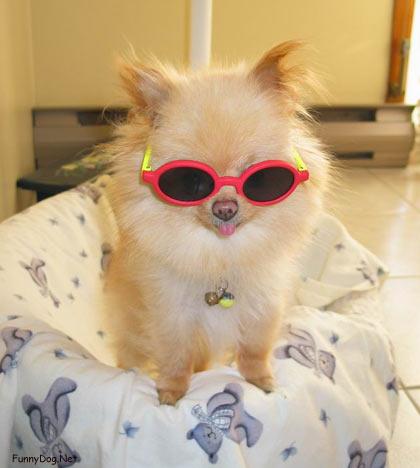 Internet Dog Pic